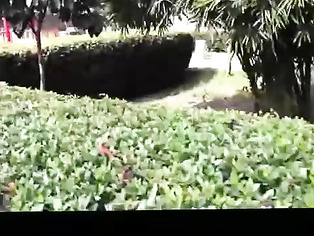 Couple Romance In Park - Movies. video3porn3